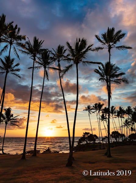 """Hawaii Palm Sunrise"""