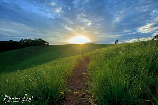 Pathway To Sunrise Art | The Mulberry Movement