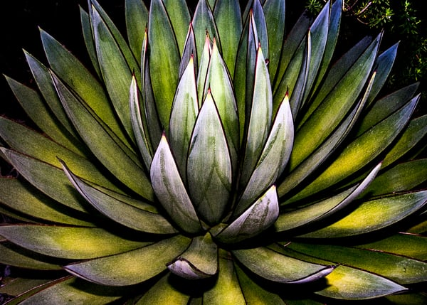 'Many Colors In One' Photograph by Nancy Miller for sale as Fine Art
