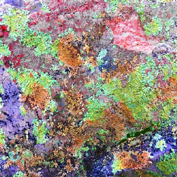 Minnewaska Lichen | Lauree Feldman | Roost Artist
