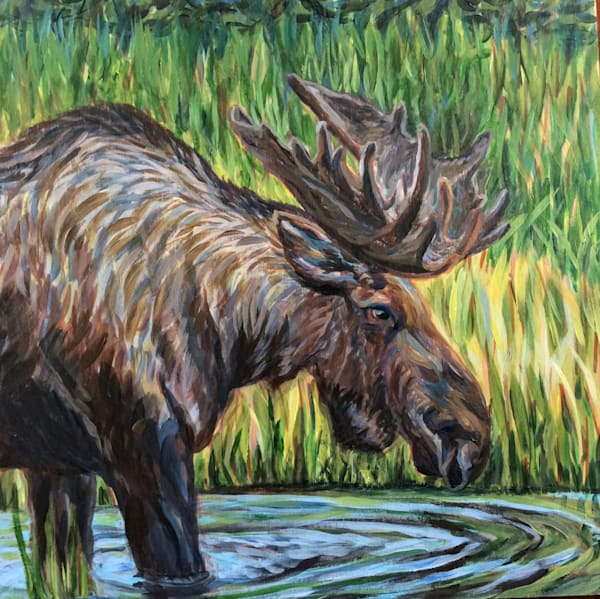 Bull Moose in Pond - Alaska art print