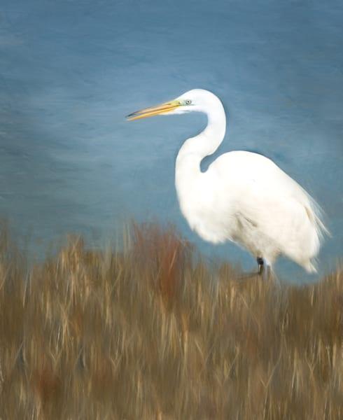 Avalon Egret