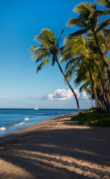 Sailboat And Palm Trees 1 Photography Art | Leiken Photography