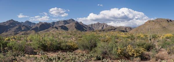 Tucson Desert Pano, Sabino Canyon, Arizona