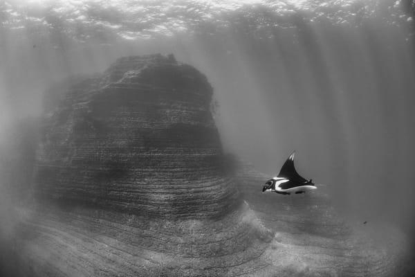 Chevron Manta Ray BW, San Benedicto Island, Mexico