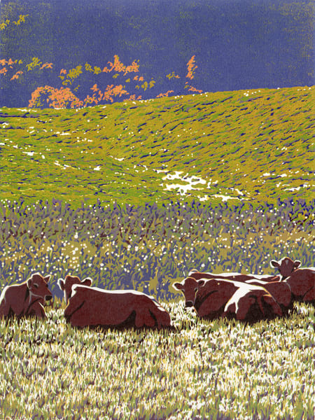 Cows relaxing in a field in autumn