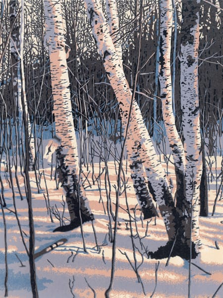 Winter birches reflect afternoon sun