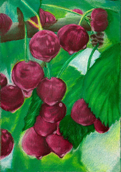 """Door County Cherries"" fine art print by Barbara Zipperer."
