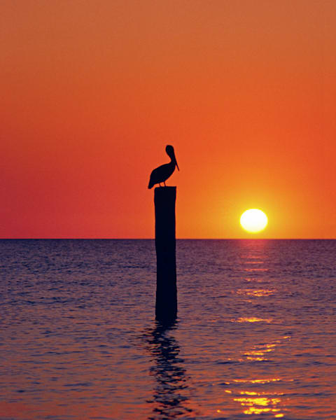 Pelican sitting on post in water at sunset Key West, Florida, USA