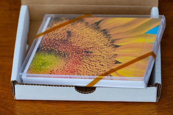 You-pick 10 blank art card gift pack - shop notecards | Closer Views