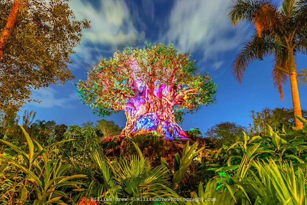 Nighttime at Animal Kingdom - Disney Wall Murals | William Drew