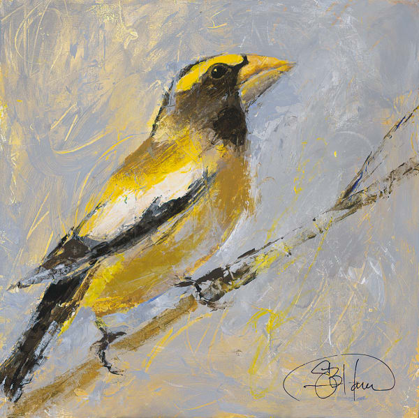 Evening Grosbeak, original and fine art print bird art painting by Sarah B Hansen