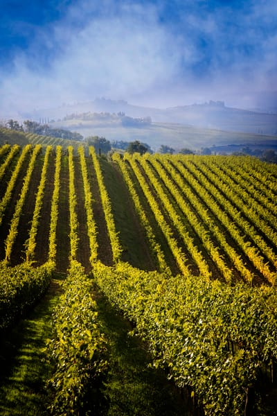 Vineyards Chianti Tuscany Italy