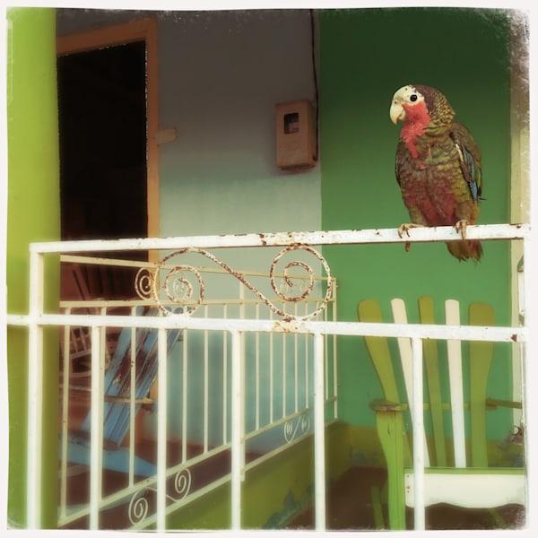 Parrot On Rail Art   photographicsart