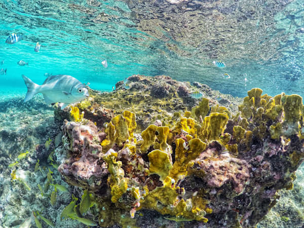 Cozumel Shallow Reef