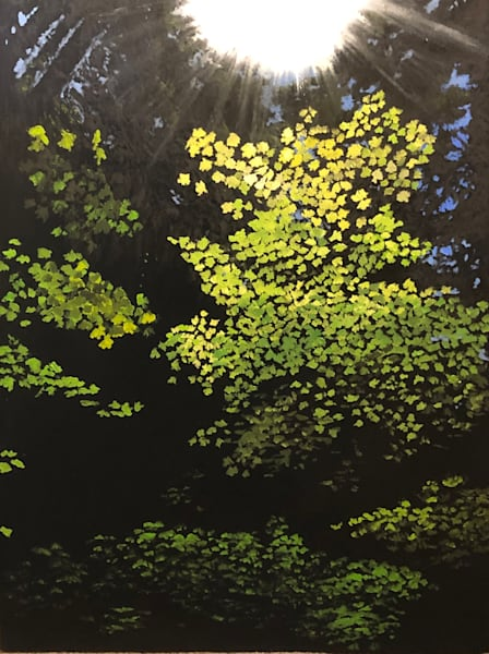 Sun Tree, State Forest