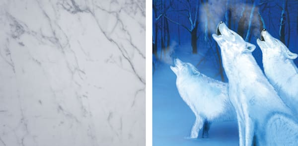 Snow Wolves Art | RPAC Gallery