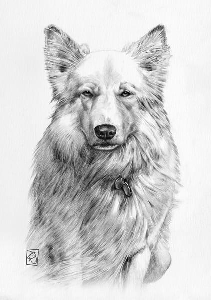 Sundog Portrait Art | SteveWedanArt