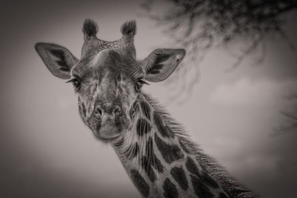 Mike Jensen Photography Africa Tanangerie Park 20190701-MCJ02527-Edit