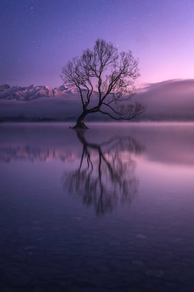'Twilight & That Tree' Photograph by Jess Santos for sale as Fine Art