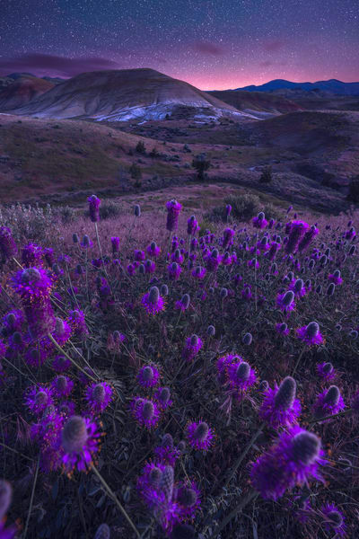 'Painted Hills & Purple Flowers' Photograph by Jess Santos for sale as Fine Art