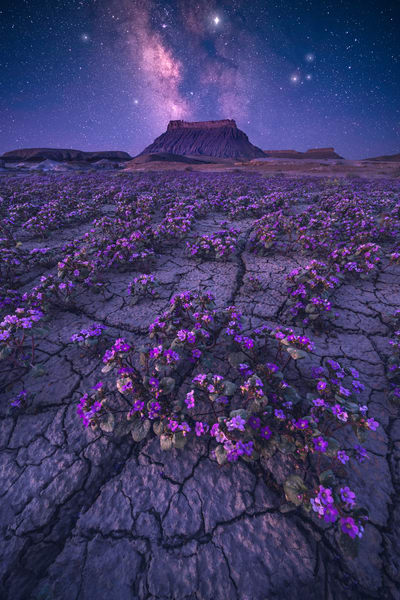 'Wildflowers & Wild Stars' Photograph by Jess Santos for sale as Fine Art
