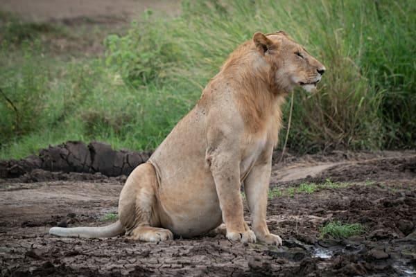 Mike Jensen Photography Africa Serengeti 20190703-MCJ04232
