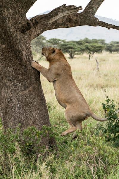 Mike Jensen Photography Africa Serengeti 20190703-MCJ04244