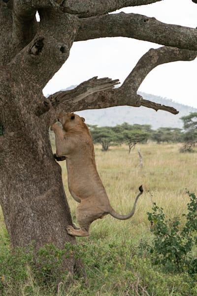 Mike Jensen Photography Africa Serengeti 20190703-MCJ04245