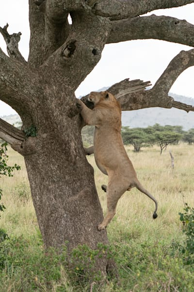 Mike Jensen Photography Africa Serengeti 20190703-MCJ04247
