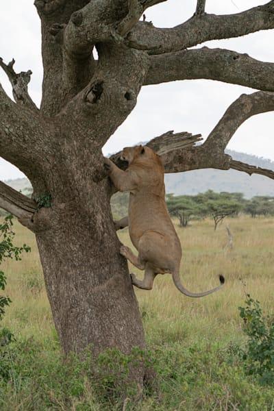 Mike Jensen Photography Africa Serengeti 20190703-MCJ04248