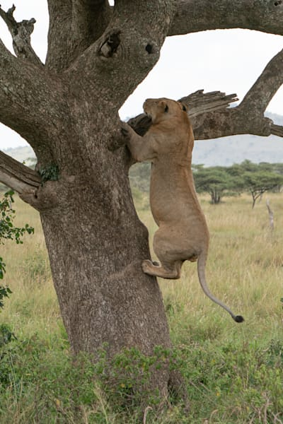 Mike Jensen Photography Africa Serengeti 20190703-MCJ04250