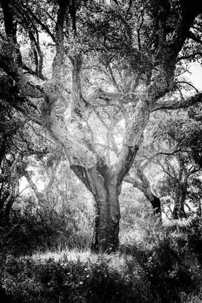 Tree #144