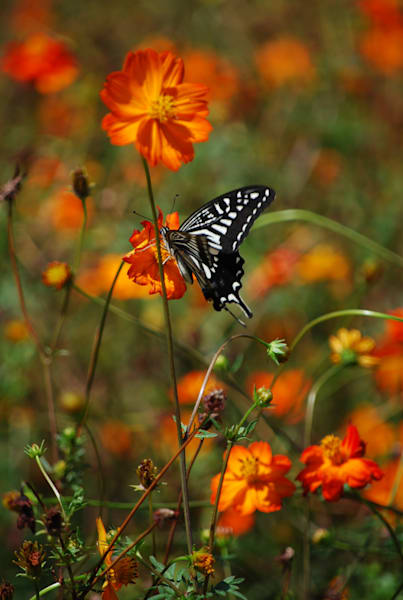 Butterfly Photography Art | Brian Ross Photography