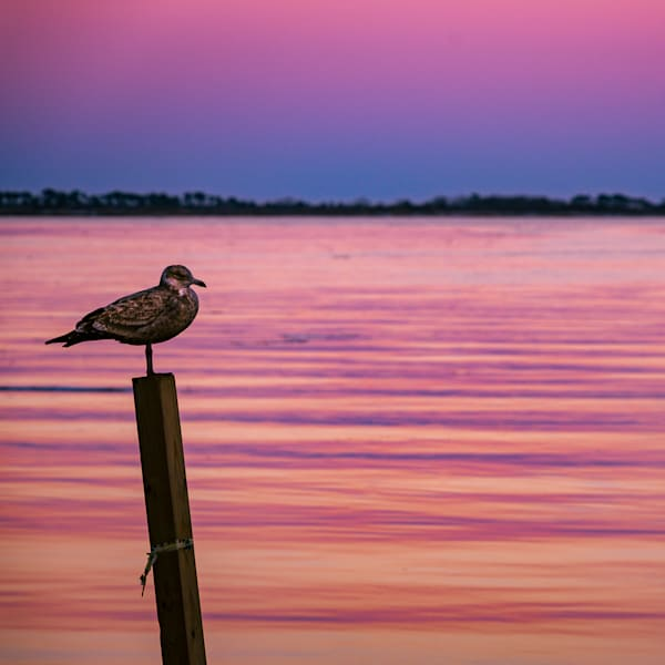 Lone Gull photograph for sale as Fine Art