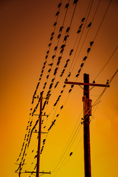 More Birds on the Wires photograph for sale as Fine Art