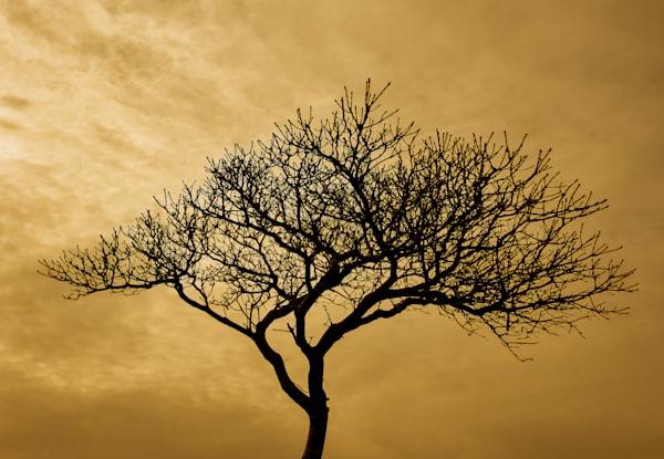Black Tree photograph for sale as Fine Art