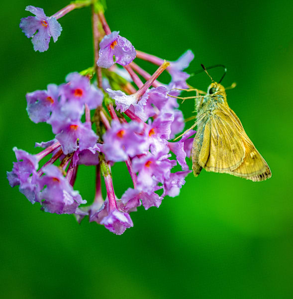Butterfly photograph for sale as Fine Art
