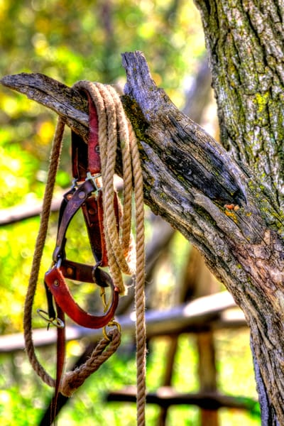 Halter In Tree