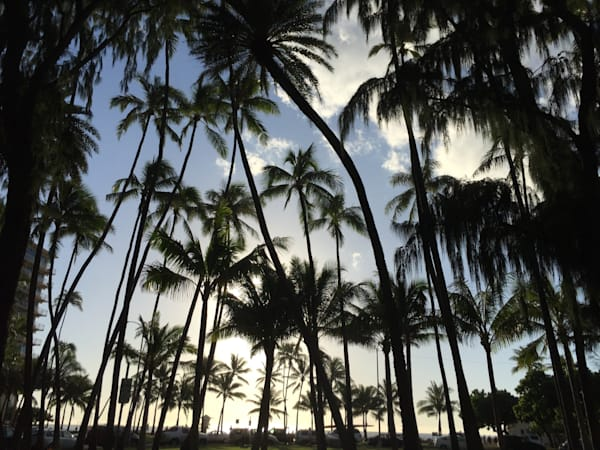 Kauai Palms Ii Photography Art | Brian Ross Photography