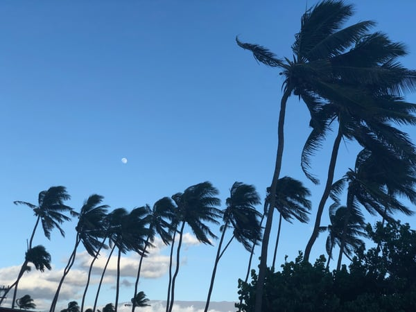 Line Of Palms  Paia, Maui Photography Art | Brian Ross Photography