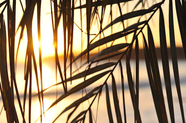 Sunset Through Leaves, Kauai Photography Art | Brian Ross Photography