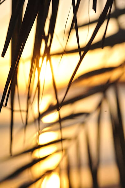 Sunset Through Leaves Vertical, Kauai Photography Art | Brian Ross Photography