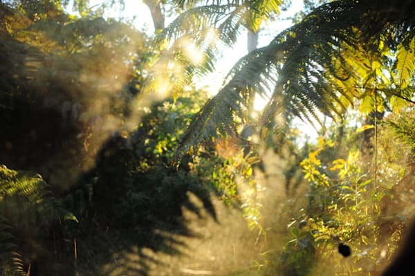 Light Ii, Hawaii Photography Art | Brian Ross Photography