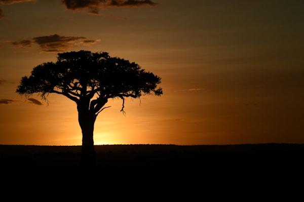 Masai Mara Sunset, Kenya Photography Art | Brian Ross Photography