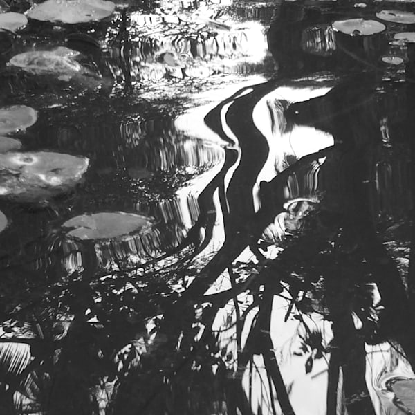 Autumn Reflections  Capetown, South Africa  B&W Photography Art | Brian Ross Photography