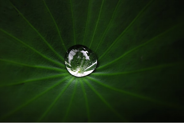 Small Drop On Leaf Photography Art by Brian Ross Photography