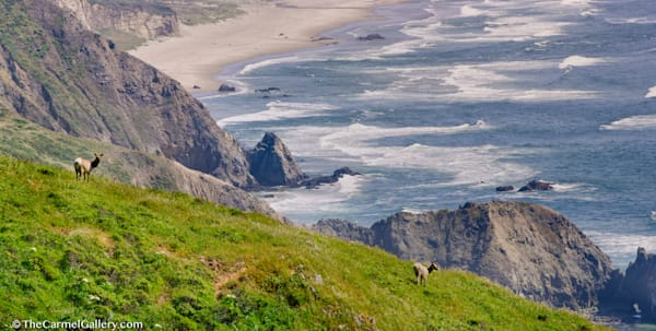 Point Reyes Elk photo