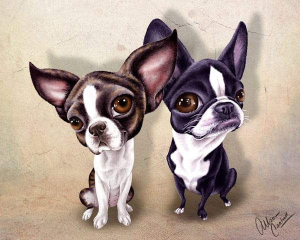 JuJu & Sophie the Boston Terriers