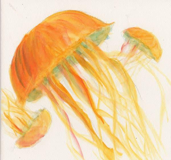 Jellyfish Original Watercolor